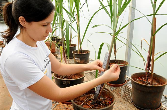 Agronomia abre inscrições nos cursos de mestrado e doutorado