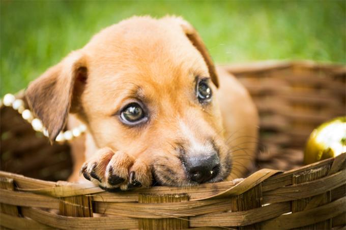 Feira de Adoção de Pequenos Animais ocorre neste domingo
