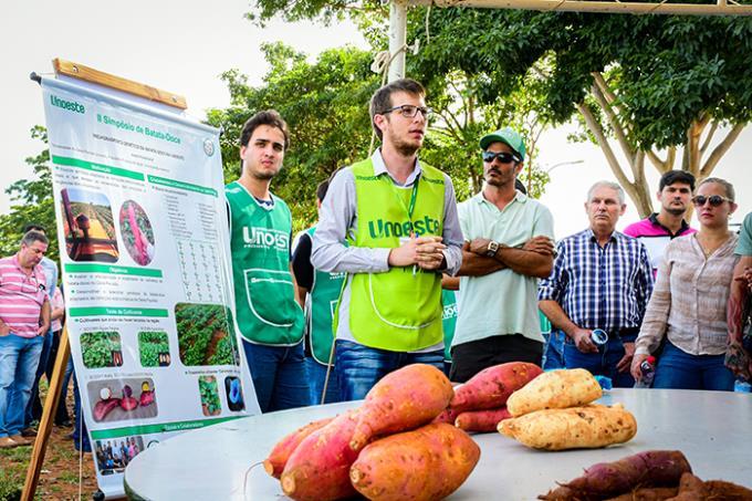 Batata-doce em alta: evento reúne pesquisadores e produtores