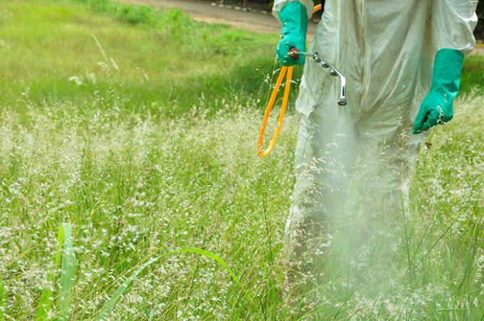 Herbicida usado em canaviais provoca lesões nos pulmões