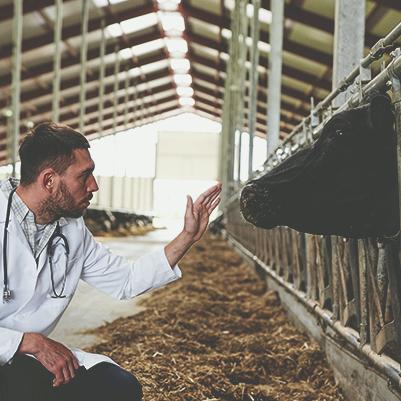 Ambiência em Edificações Rurais para Produção Animal