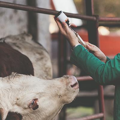 Treinamento em Métodos de Diagnóstico e Controle da Brucelose e Tuberculose Animal e de Noções em Encefalopatias Espongiformes Transmissíveis - 5ª turma