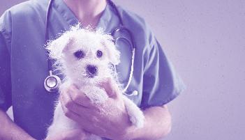 Clínica e Cirurgia de Pequenos Animais - Turma 16