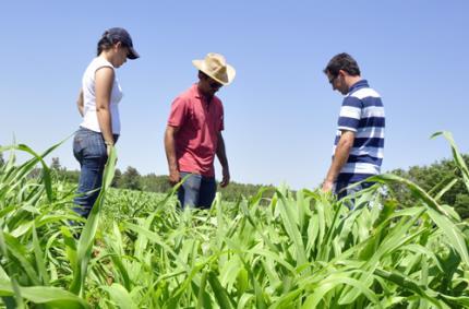 Resultado de imagem para curso agronomia